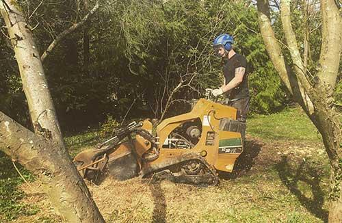 Tree Surgery 63