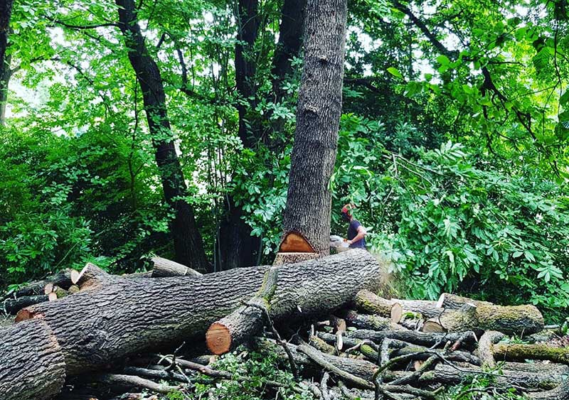 Tree Surgeon in Dorking - Arboright