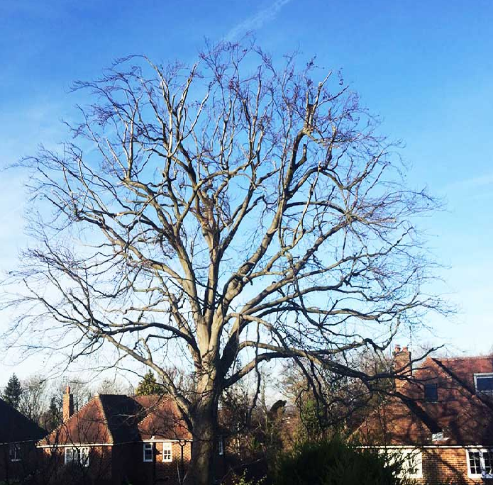 Tips for Autumn and Early Winter Tree Care